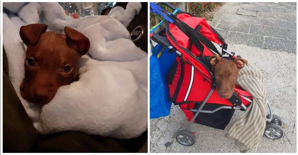 Lo abandonaron en una caja sin poder caminar más pero el cachorro lucha por levantarse de nuevo