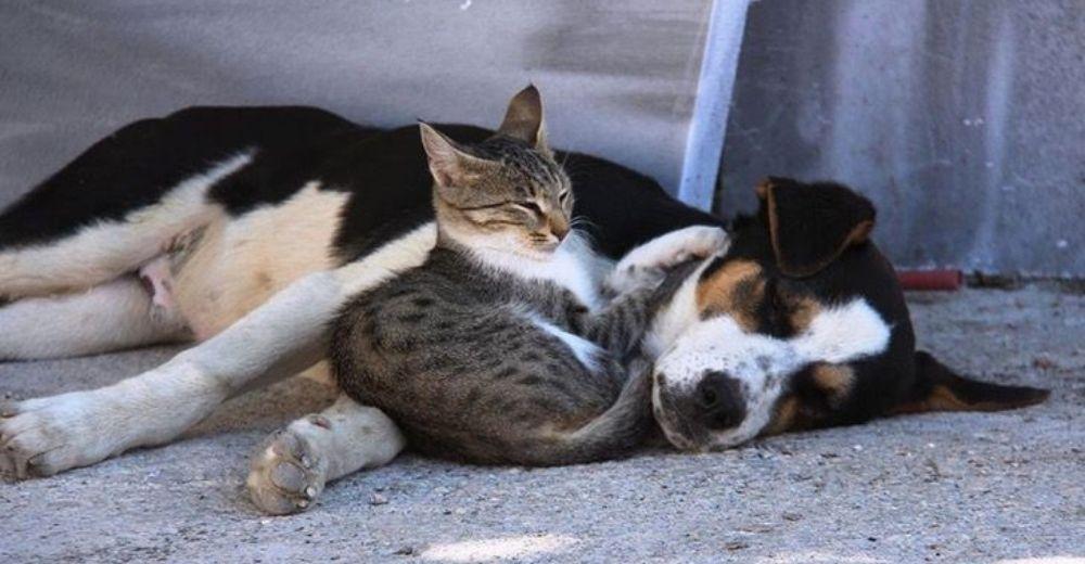 Un perro y un gato se vuelven inseparables sobreviviendo y acurrucándose juntos en la calle