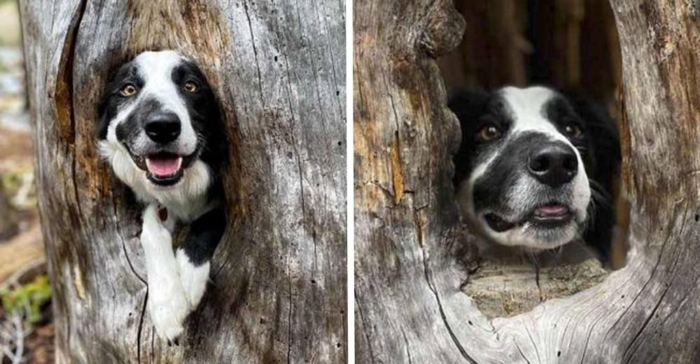 Perrito convierte un acogedor rincón de un árbol en su nuevo refugio y vuelve a sonreír