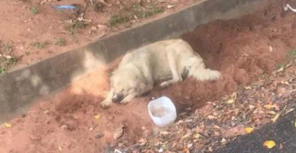 Adoptaron al perrito que esperó 8 días a su dueña afuera del hospital sin saber que había muerto