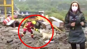 Un perrito y un bombero se pelean por un trapito durante una transmisión en vivo