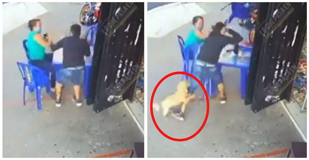 Su perro se lanza contra el ladrón que intentaba despojarla de sus pertenencias mientras comía