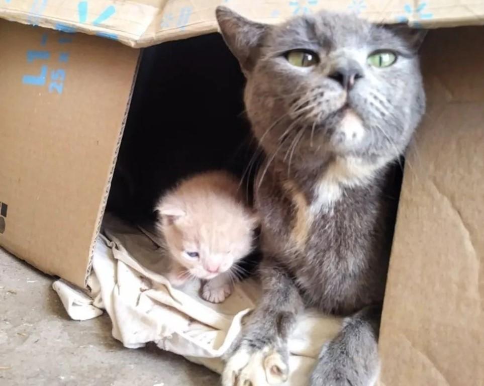 Rescatan a una gata y los guía hacía el lugar en el que yacían sus bebés recién nacidos