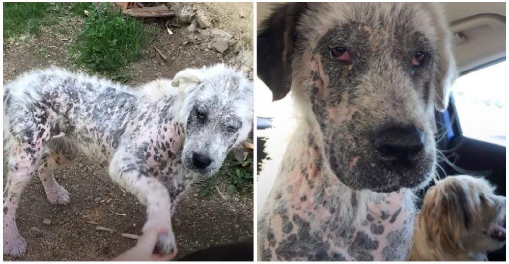 Una perrita gravemente enferma se niega a recibir ayuda sin salvar también a su mejor amigo