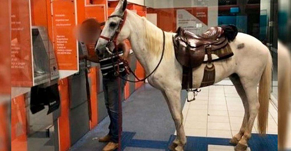 Señalan al hombre que acudió a retirar dinero en el banco acompañado de un caballo