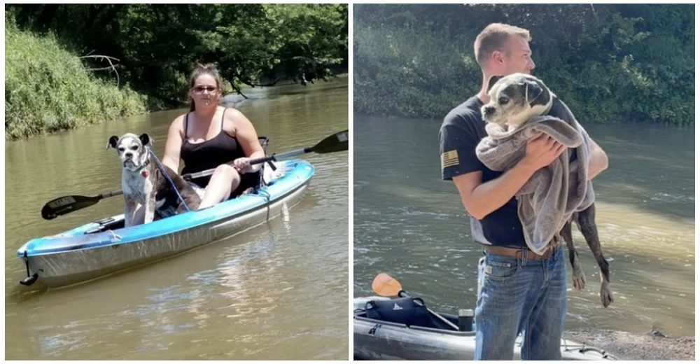 Pareja que paseaba en kayak encuentra una perrita lesionada que huyó de los fuegos artificiales