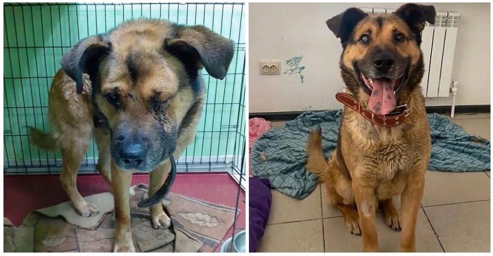 Encuentran a un perrito luchando por su vida abandonado en la nieve tras hacerle perder su ojito