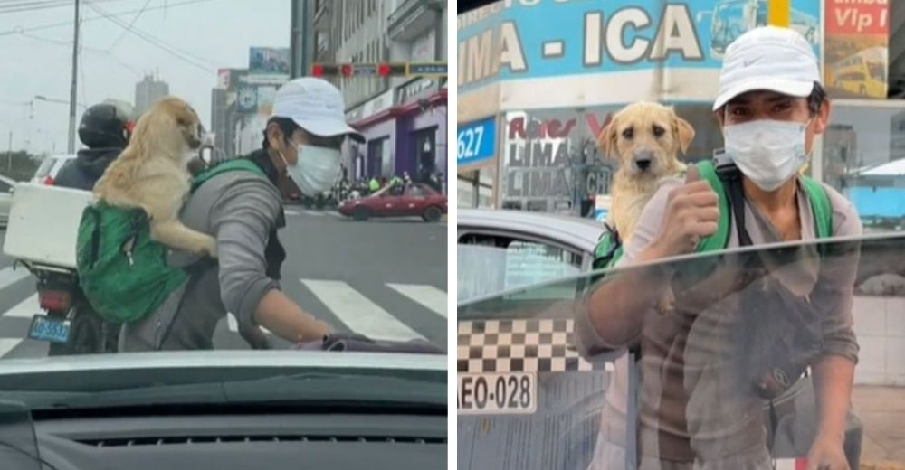 Graban a un joven trabajando duramente en las calles con su cachorrito en la espalda