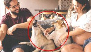 """Terminan """"desilusionados"""" tras incluir a sus 2 perros en la sesión de fotos prenatal"""