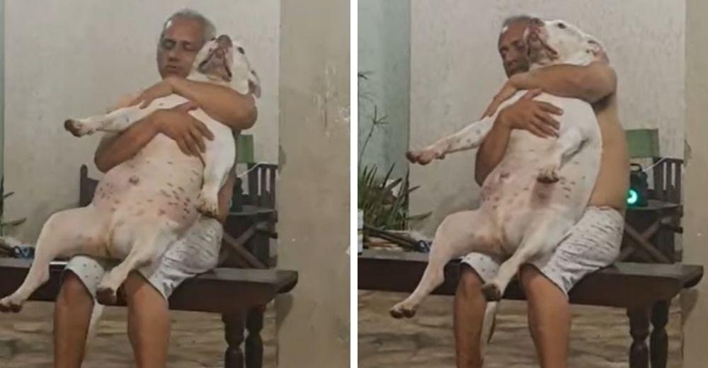 Graba a su padre con el pitbull adoptado en su regazo después de que dijo odiar a los perros