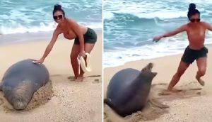 Una pareja se graba perturbando a una foca en peligro extinción, y después se arrepienten