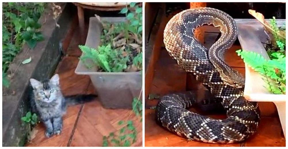 Cuando una enorme serpiente de cascabel iba a atacarlo su fiel gatita lo salvó