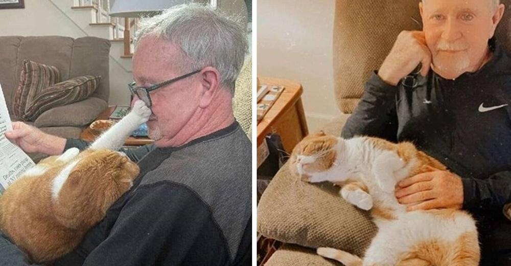 Gatito no deja a su abuelo solo un segundo desde que se dio cuenta de que estaba enfermo
