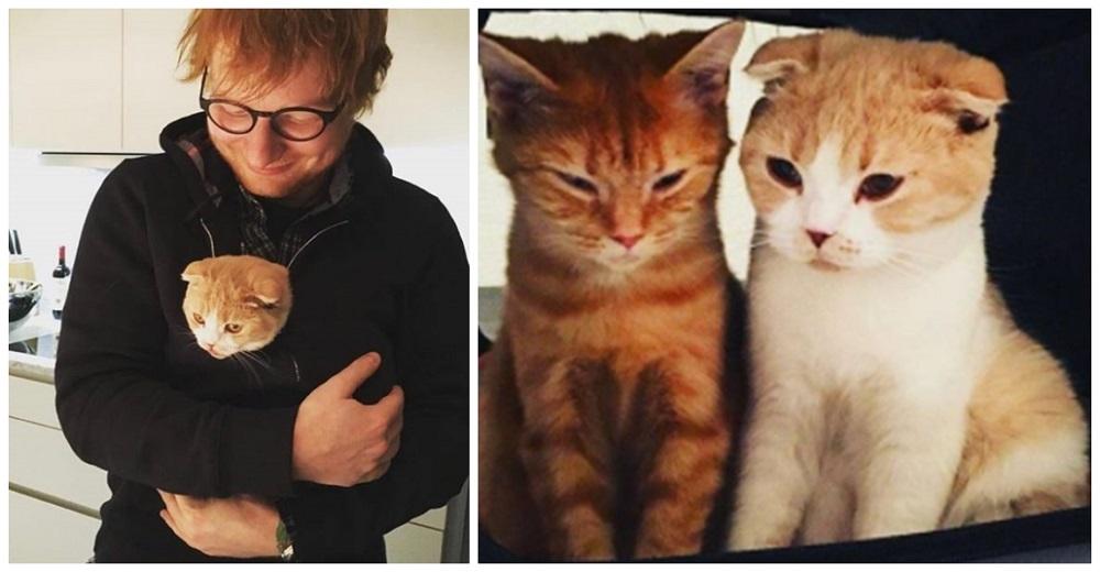 Tras la muerte de su gato, Ed Sheeran está loco de amor por su mininos adoptados