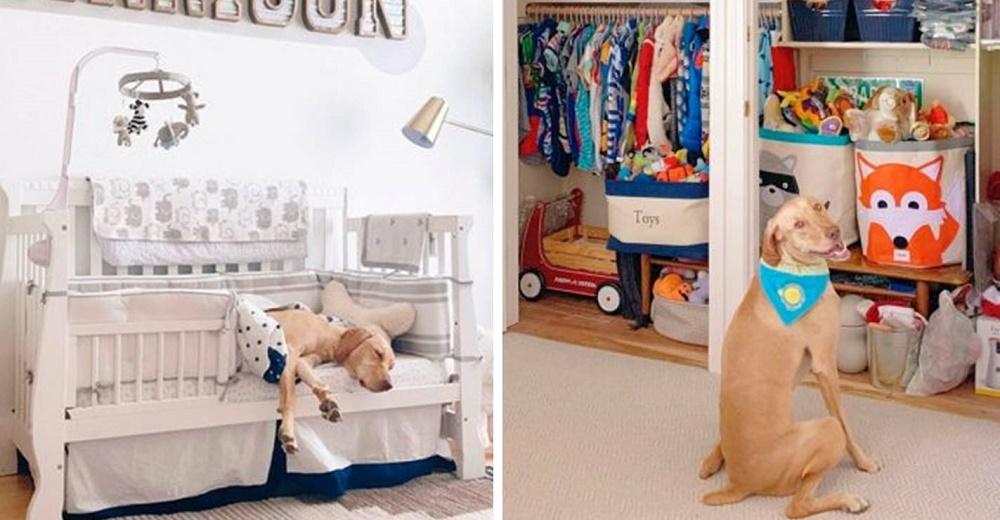 Señalan a la mujer que decoró una lujosa habitación de bebé para recibir a su nuevo perrito
