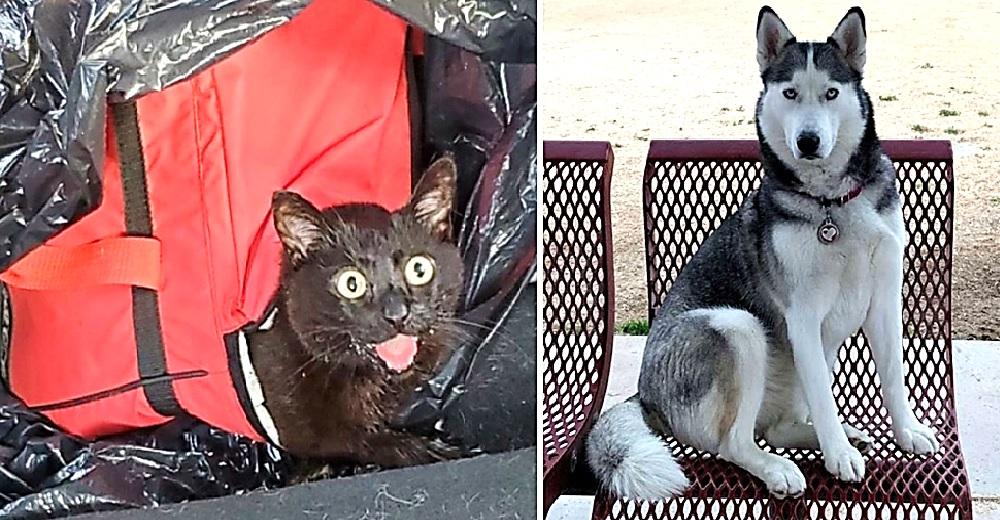 Perrita salva a una gata que fue dejada por sus dueños para morir dentro de una hielera cerrada