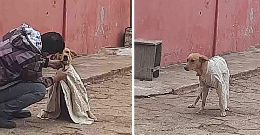 Ve a un joven quitándose la camisa para abrigar a un perrito callejero que temblaba de frío