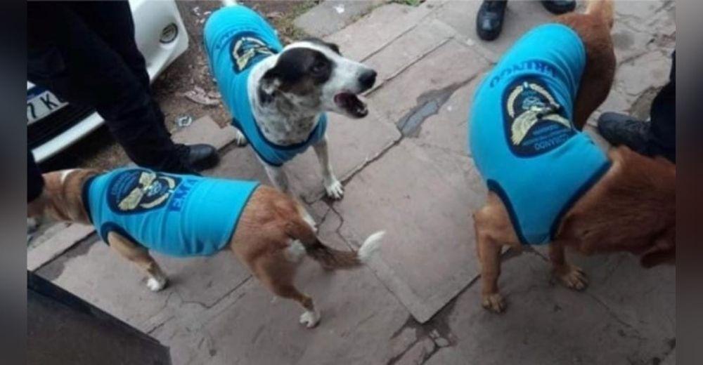 Captan a oficiales acercándose a abrigar perritos callejeros con chaquetitas de la Policía