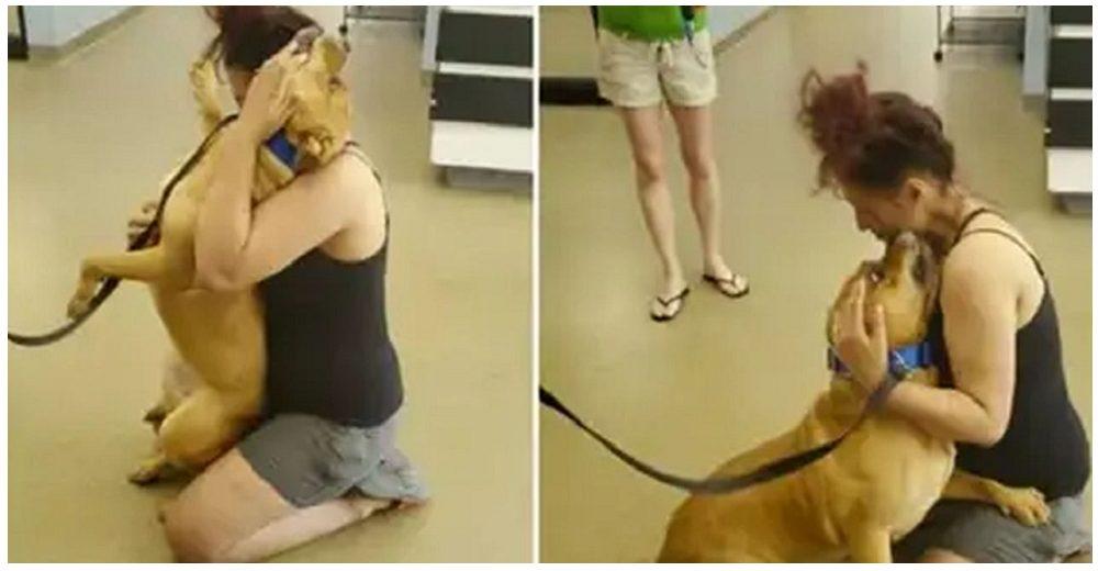 Mujer va a un refugio a adoptar y entre lágrimas abraza al perrito que perdió hace 2 años