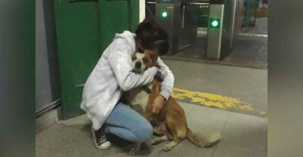 Llora al recuperar a su perrito anciano gracias a la solidaridad de todos los que se unieron