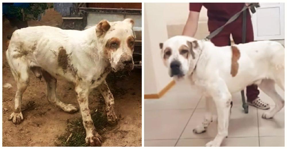 Rescatan al perrito ancianito abandonado por sus dueños tras 10 años de ser usado como alarma