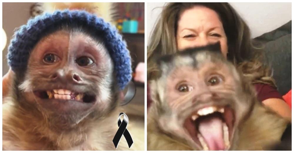 El monito que hacía reír a todos con sus vídeos muere en la camilla del veterinario