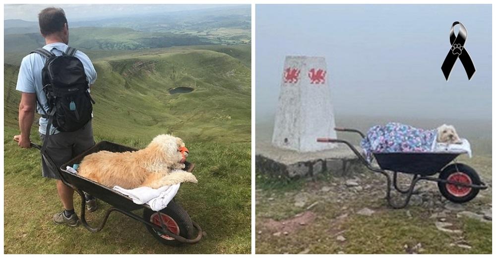 Lleva a su perrito moribundo en una carretilla a su montaña favorita para un último paseo