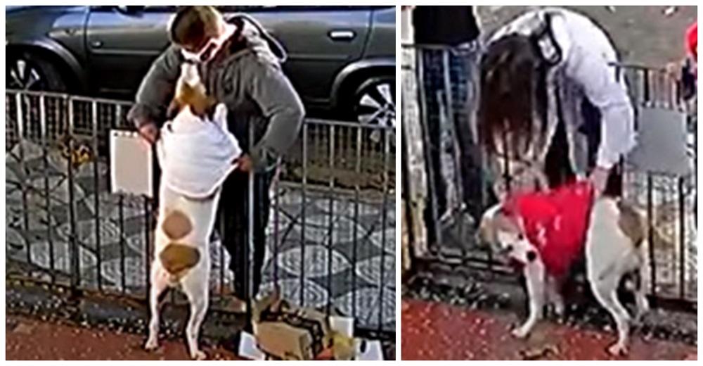 Veterinaria es grabada abrigando a la pobre perrita víctima de un sujeto que le robó su suéter