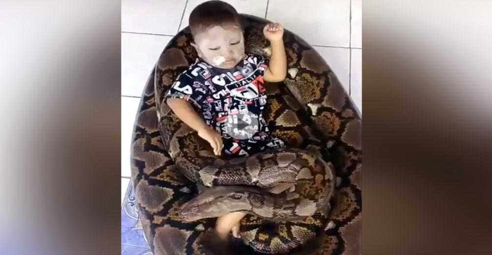 «No está asustado» – Un niño de 3 años juega relajado con una enorme pitón