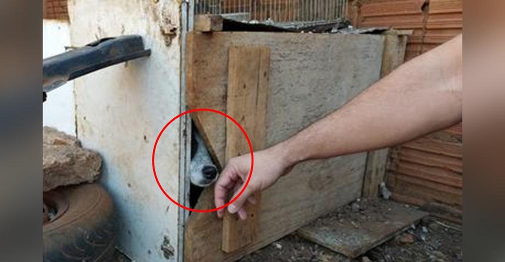 """Una mujer encierra a su inocente perrito en una caja estrecha durante meses por """"muy travieso"""""""