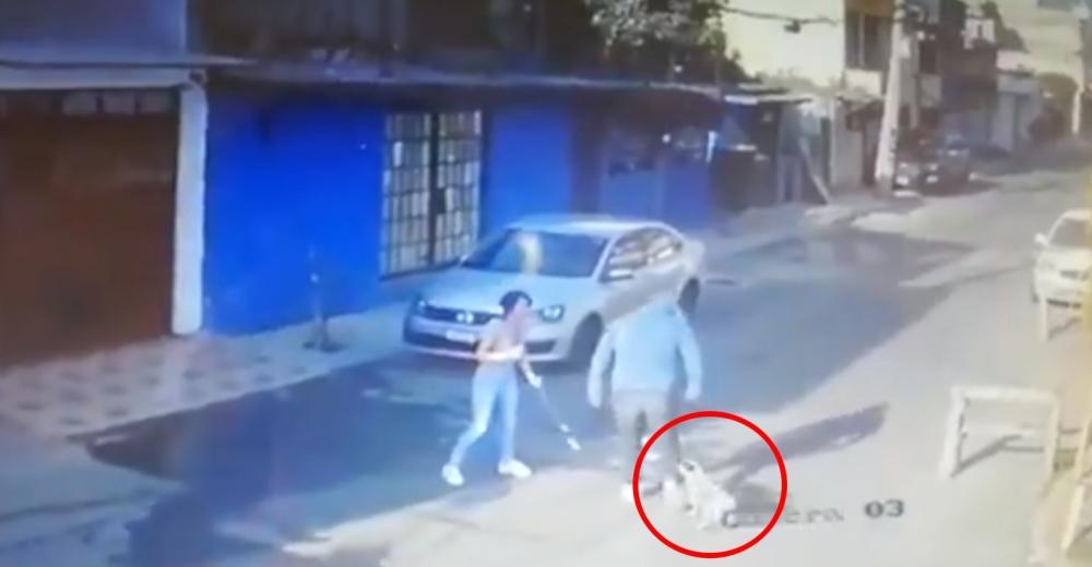 Su perrito la defiende con mordidas y rasguños del criminal que la interceptó en la calle