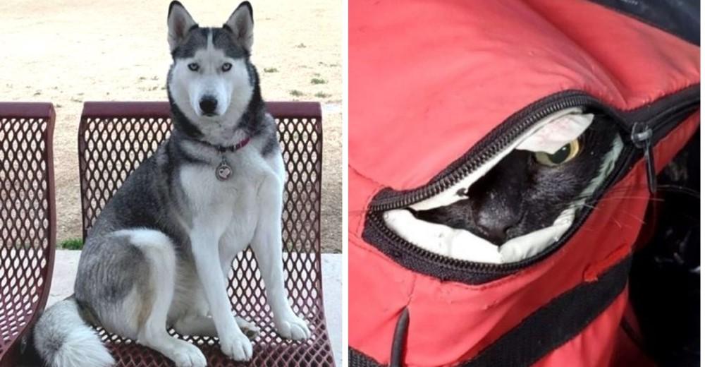 Un perro encuentra a una gatita dentro de una hielera y salva su vida