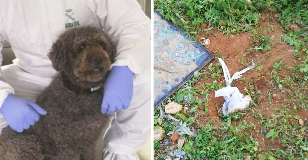 Un perro encuentra los 40.000 euros que les robaron a una pareja de abuelitos en el hospital