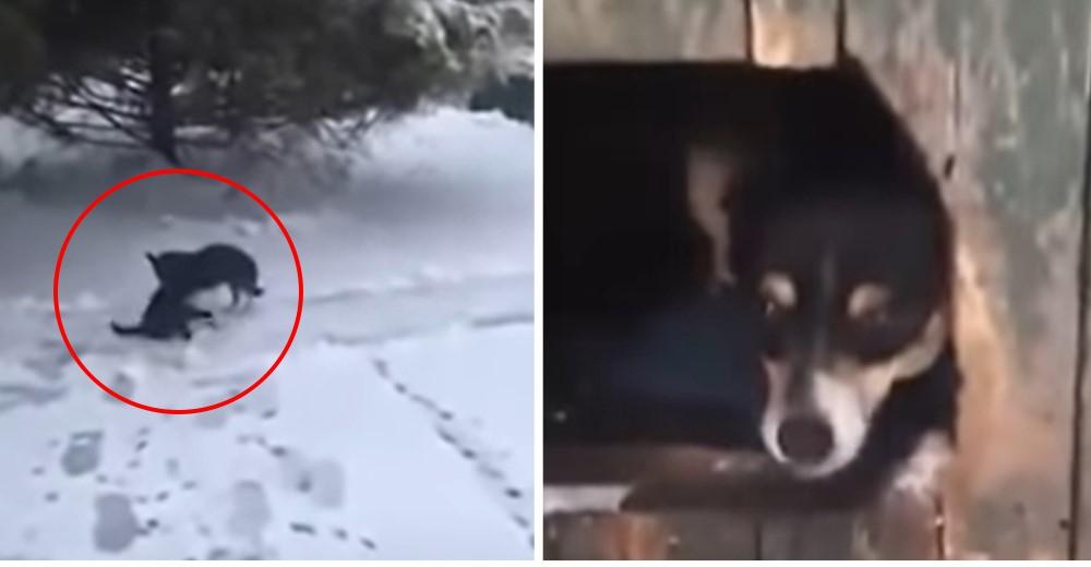 Desde la ventana mira a su perro arrastrando a un gatito a punto de morir congelado en la nieve