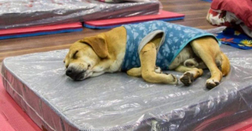 Abren un refugio para personas sin hogar donde las mascotas también son bienvenidas