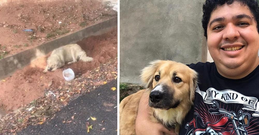 Perrito leal que esperó a su dueña fallecida fuera del hospital halla el amor junto a 10 peludos