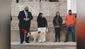 Perrito callejero interrumpe un acto del gobierno para hacerse pis sobre una funcionaria y se va