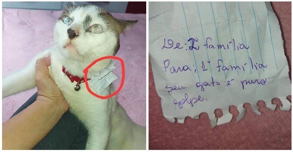 """Su gato llega a casa con una nota en su collar de su segunda familia – """"Nos está engañando"""""""