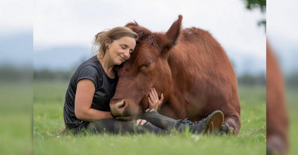 Becerrito a punto de ser sacrificado es ahora el gran toro mascota de la mujer que lo salvó