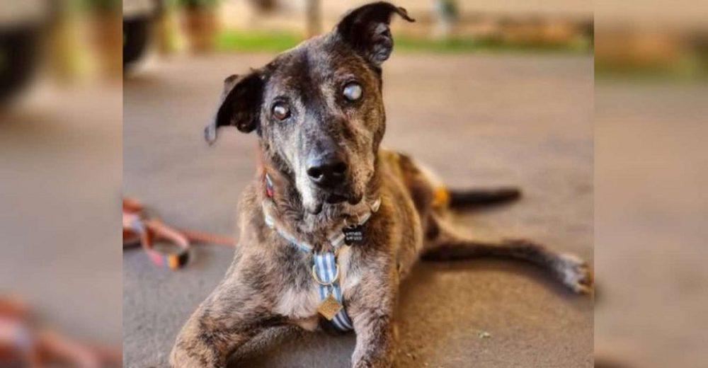 Perrito ciego y sin una patita que esperó por 10 años para ser adoptado, ahora es el más feliz