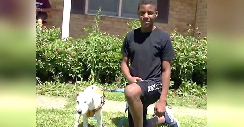 Un perrito anciano desorientado sigue a un niño de 13 años y él lo ayuda a regresar a casa
