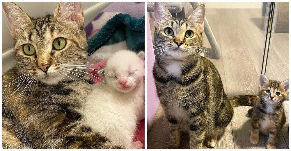 Hermosa madre gata encuentra un hogar amoroso para dar a luz y logra salvar a todas sus crías