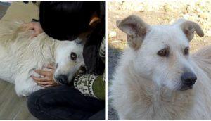 Buddy, un perrito sin hogar y con cáncer, solo pedía ser abrazado al ser rescatado