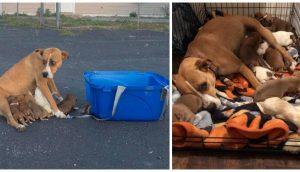 Rescatan a la perrita que fue abandonada con sus 9 crías en el estacionamiento de una iglesia