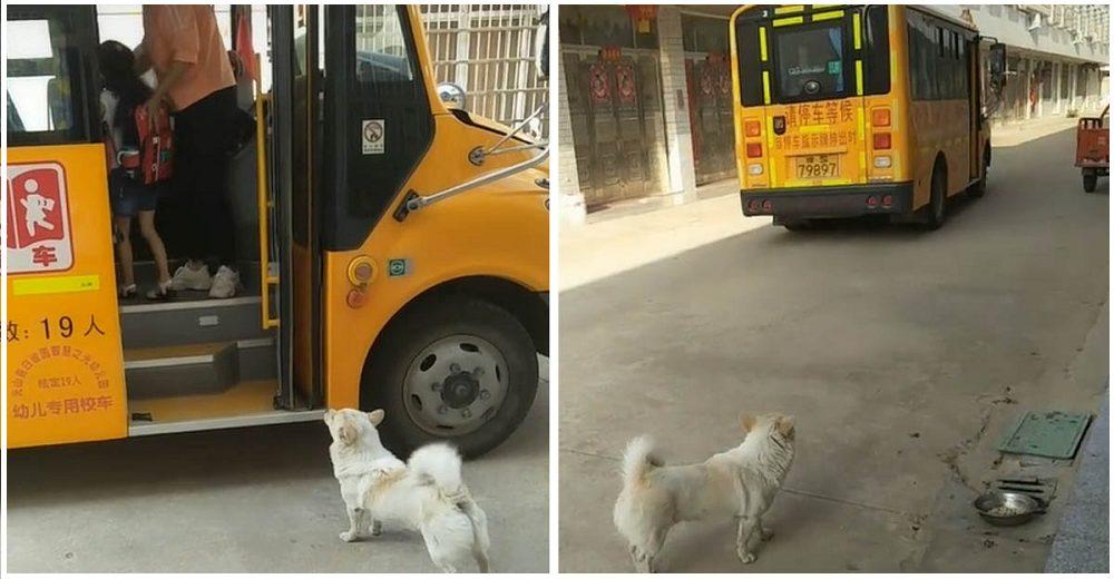 Perrito leal acompaña a su dueña a tomar el bus escolar cada día para saber que está a salvo