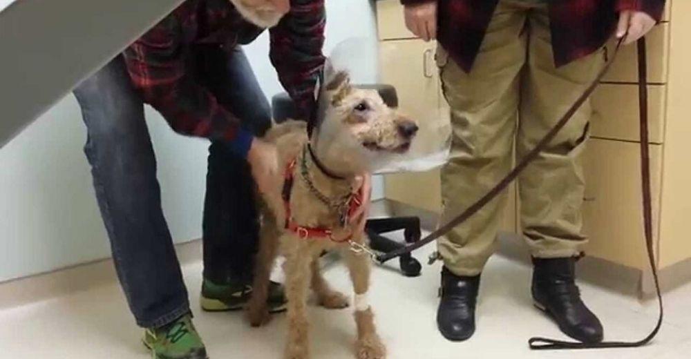 Perrito ciego recibe una cirugía para ver a su familia de nuevo y no puede contener su emoción