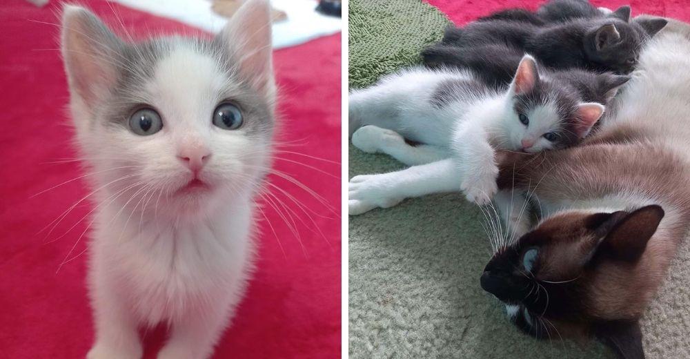Un gatito estaba solito hasta que una mamá gata lo acepta como suyo y lo incluye en su familia
