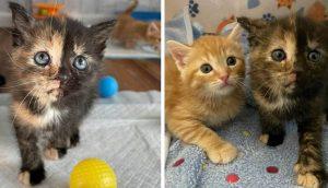 Dos gatitas rescatadas logran salir adelante gracias al amor de una familia