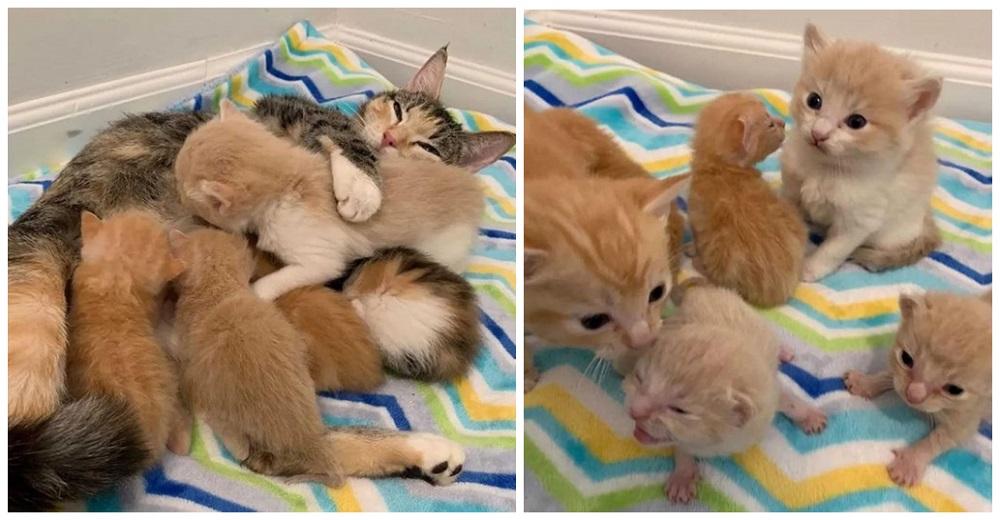 Gata hallada con sus 2 camadas de gatitos agradece que sus sueños se hayan hecho realidad