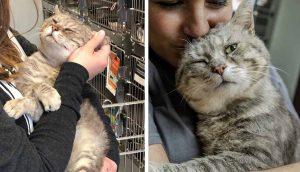 Agradecido gatito abraza a todo humano que conoce desde que lo rescataron de la calle